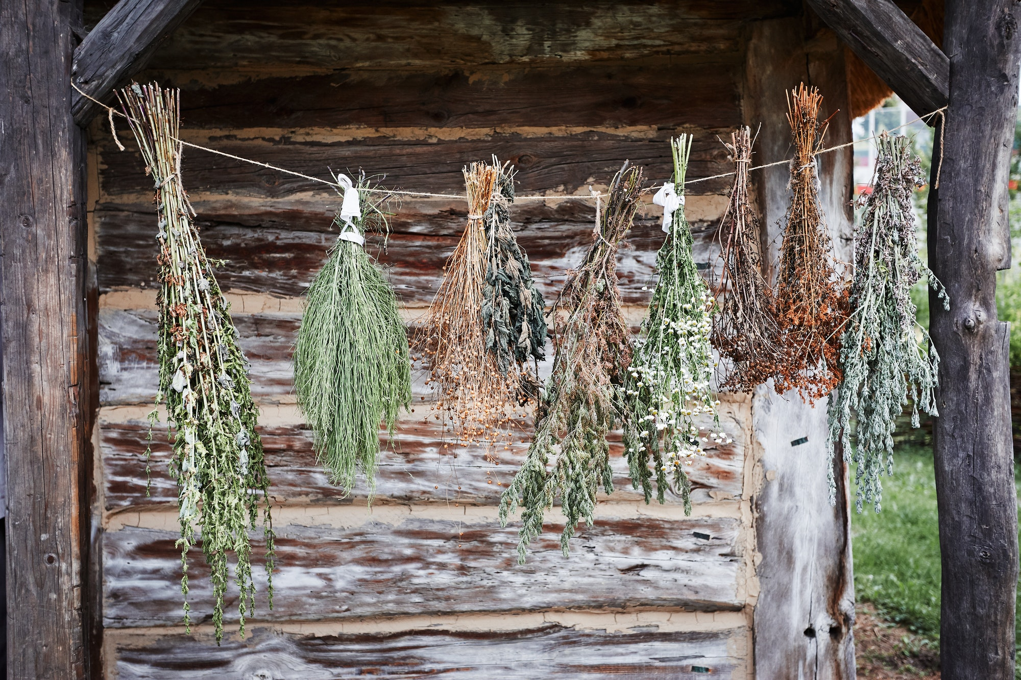 Some species of herbs are withering, hanging on a linen string outdoors at front of old cottage